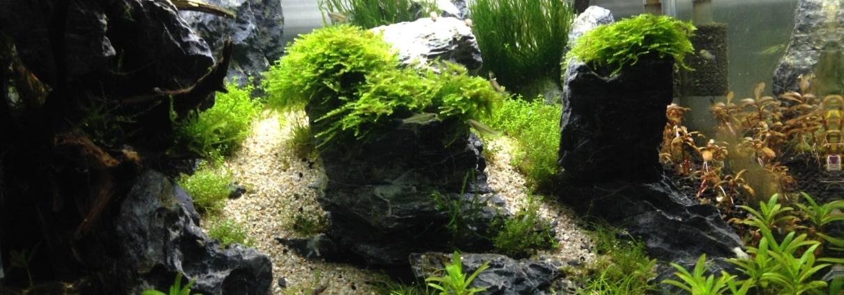 Scaper tank - Aquarilis