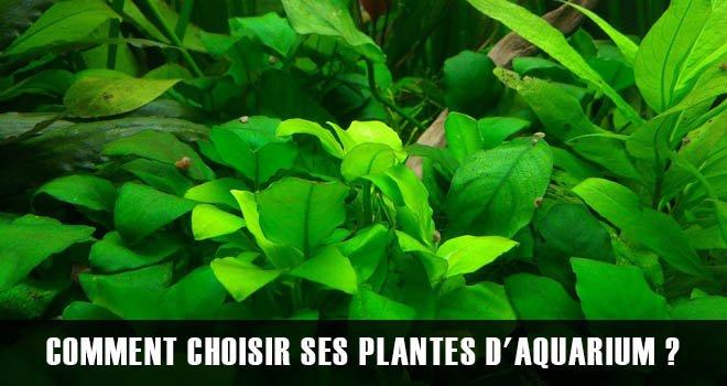 Comment choisir ses plantes ?