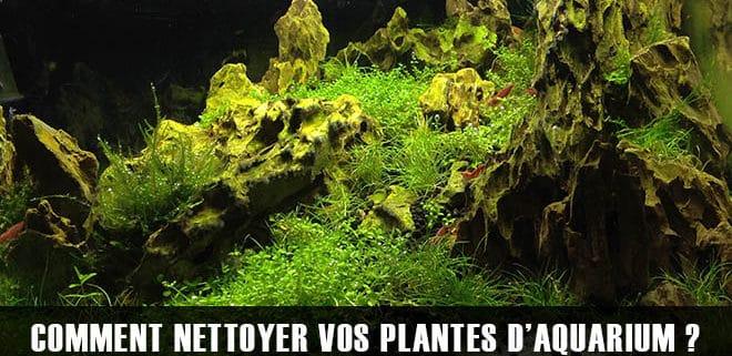Comment nettoyer les plantes d'aquarium ?