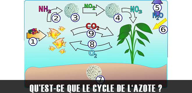 Qu'est-ce que le cycle de l'azote ?