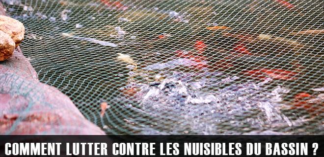 Les nuisibles du bassin