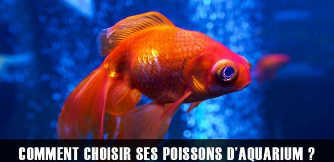 Comment choisir ses poissons pour son premier aquarium ?